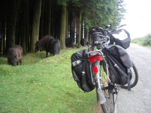 Cambo and Horses
